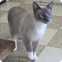 Adopt A Pet :: Feisty - Glenwood, MN