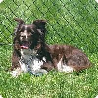 Adopt A Pet :: Molly - Whitehall, PA