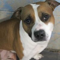 Adopt A Pet :: Rufus - Lafayette, IN