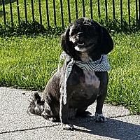 Adopt A Pet :: Gizmo - London, KY