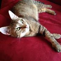 Adopt A Pet :: Gloria - Des Moines, IA