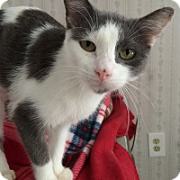Adopt A Pet :: Cher - Middletown, NY