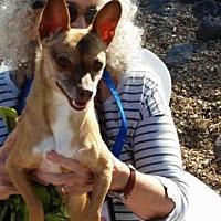 Adopt A Pet :: RUEPERT - Albuquerque, NM