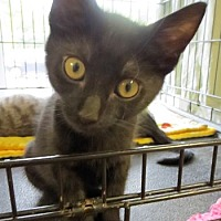 Adopt A Pet :: Aladdin - Lunenburg, MA