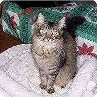 Adopt A Pet :: Henry - Simms, TX