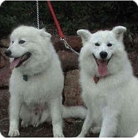 Adopt A Pet :: Douja - Arvada, CO