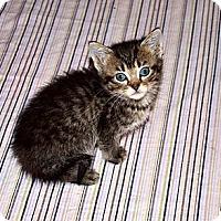 Adopt A Pet :: Leo - Xenia, OH