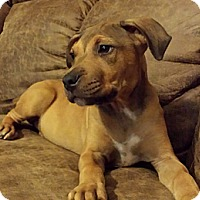 Adopt A Pet :: Zena-adoption in progress - Marshfield, MA