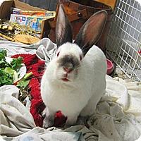 Adopt A Pet :: Lilly - Brooklyn, NY