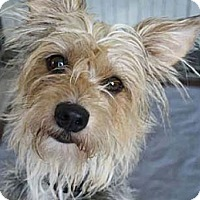 Adopt A Pet :: ABBEY - Salt Lake City, UT