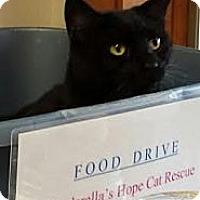 Adopt A Pet :: Salem & Jett - West Dundee, IL