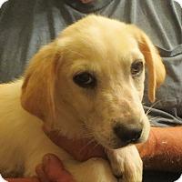 Adopt A Pet :: Jordan - Greenville, RI
