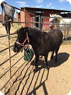 Pony - Other Mix for adoption in Tucson, Arizona - Cocoa