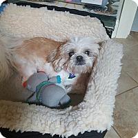Adopt A Pet :: Zoey - Marietta, GA