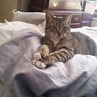 Adopt A Pet :: ZsaZsa - Orlando-Kissimmee, FL