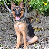 Adopt A Pet :: Iggy - San Diego, CA