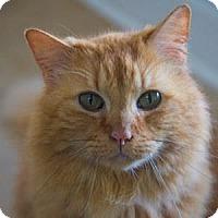Adopt A Pet :: Harvey Milk - Decatur, GA