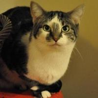 Adopt A Pet :: Rachael - Elk Grove Village, IL