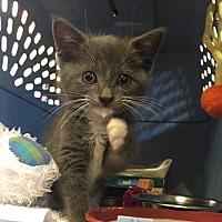 Adopt A Pet :: Oliver - Goshen, NY