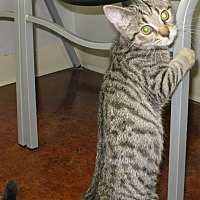 Adopt A Pet :: Willy - Bedford, VA