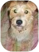 Terrier (Unknown Type, Medium) Mix Dog for adoption in Tallahassee, Florida - Tucker