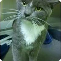 Adopt A Pet :: Titan Reed - Richboro, PA