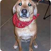 Adopt A Pet :: Argos - Warren, NJ