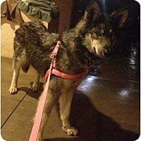 Adopt A Pet :: Jewel - Oceanside, CA