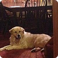 Adopt A Pet :: Jasper - Dandridge, TN
