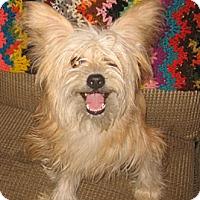 Adopt A Pet :: Jasper - Chandler, AZ