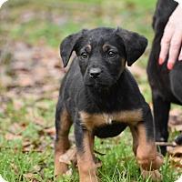 Adopt A Pet :: Dorte - South Dennis, MA