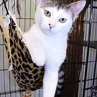 Adopt A Pet :: Mickey - Lumberton, NC