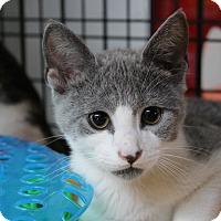 Adopt A Pet :: Tanner - Sarasota, FL