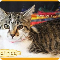 Adopt A Pet :: Beatrice - South Bend, IN