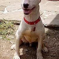 Adopt A Pet :: Windsor - Houston, TX