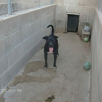 Adopt A Pet :: HANSEL - KELLYVILLE, OK