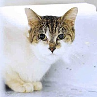 Adopt A Pet :: MISTY - Tavares, FL