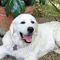 Adopt A Pet :: White Cloud - Kyle, TX