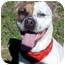 Photo 1 - Boxer Mix Dog for adoption in Huntington, New York - Pippin