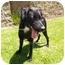 Photo 1 - Labrador Retriever Mix Dog for adoption in El Cajon, California - Sophie