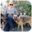 Photo 4 - German Shepherd Dog Mix Dog for adoption in Los Angeles, California - Minka von Munster