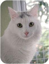 Domestic Longhair Cat for adoption in Van Nuys, California - Arrow