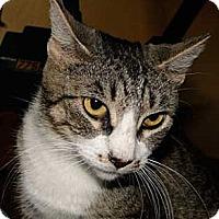 Adopt A Pet :: Darby - Schertz, TX