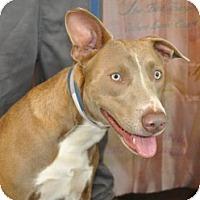 Adopt A Pet :: Unique Happy Hibachi - Baltimore, MD