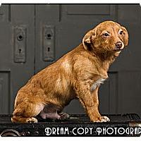 Adopt A Pet :: Cheddar - Owensboro, KY