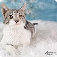Adopt A Pet :: Rocco - Eagan, MN