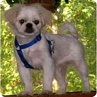 Adopt A Pet :: Casper-NJ - Mays Landing, NJ
