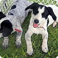 Adopt A Pet :: Princess - Honolulu, HI