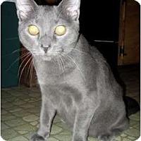 Adopt A Pet :: Barley - Quincy, MA