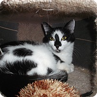 Adopt A Pet :: Cordelia - Frederick, MD